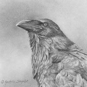 """Corvus-corax"""