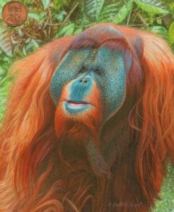 """The Sage of Borneo"""