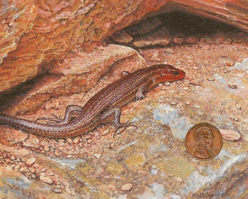 """""""Basking Broadheaded Skink"""" by Wes, is 3 x 3 inches."""