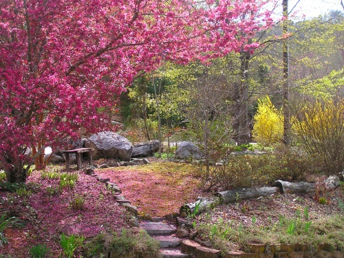 The Crabapple Tree and blossom covered steps in our front yard.