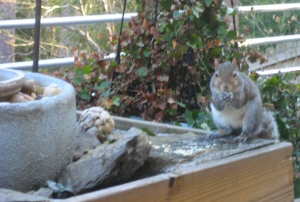 Chester the Squirrel enjoying the peanut cruchies.
