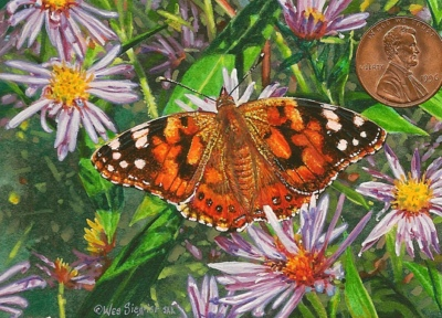 """Painted Lady on Asters"" by Wes, measures 2 1/2 x 3 1/2 inches."