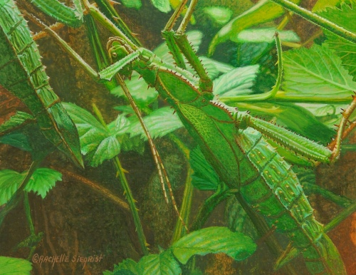 """Malaysian Jungle Nymph"" by Rachelle, measures 3 1/2 x 4 1/2 inches."