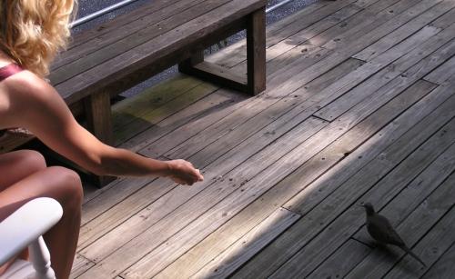 Me feeding Dovecakes on the back porch.