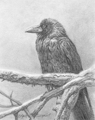"""Raven on Old Pine"" by Rachelle"