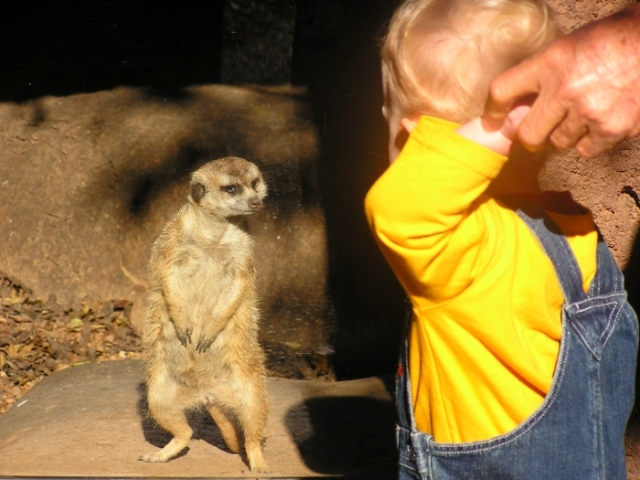 Tyler making friends with a resident Meercat at the Knoxville Zoo.