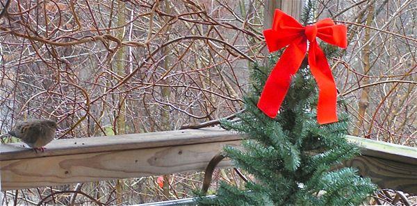 morning dove photo