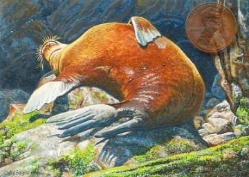 sea lion painting miniature