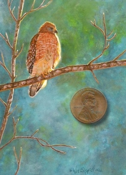 red-shoulderedhawk painting miniature