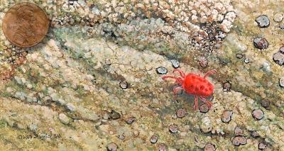 spider mite painting