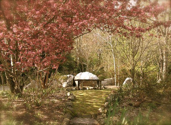 photo of flowering Crabapple Tree