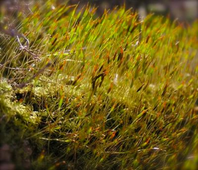 photo of blooming moss