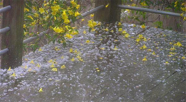 photo of hail