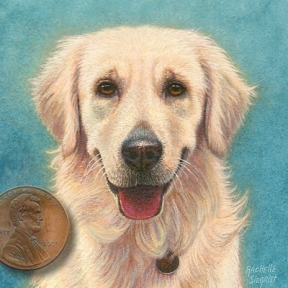 dog portrait miniature of an english golden retriever