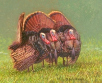 Turkey Painting