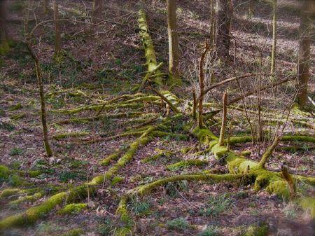 photo of white oak sinks trail