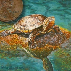 miniature painting of a turtle