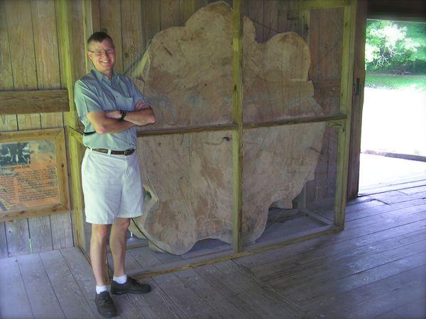photo of the Trigonia Elm