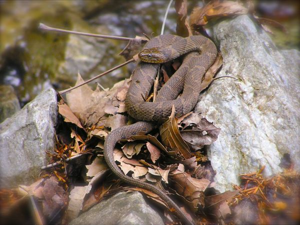 photo of water snake