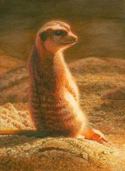 miniature painting of a meerkat