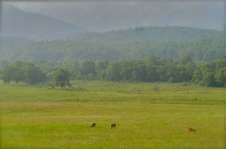 photo of deer in cades cove