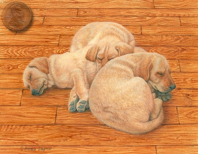 yellow lab portrait miniature painting