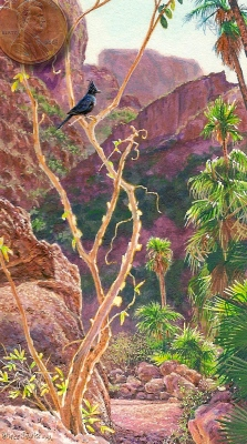 miniature painting of phainopela at nacapule canyon