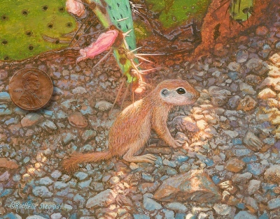 Lil' Roundtail Ground Squirrel - Watercolor wildlife painting by Rachelle Siegrist