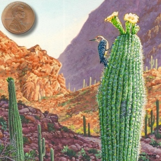 miniature painting of a gila woodpeacker on a cactus