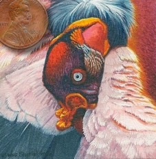 miniature paitning of a kng vulture
