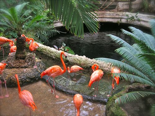photo of flamingos
