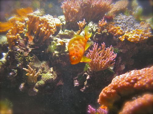 underwater photo of saltwater fish
