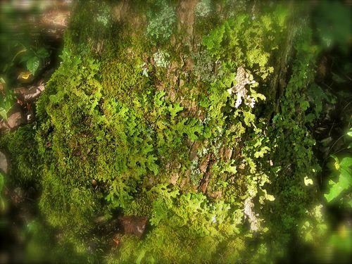 photo of moss in cades cove
