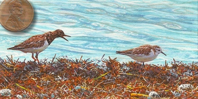 sanderling miniature painting