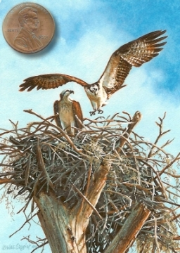 miniature painting of nesting ospreys