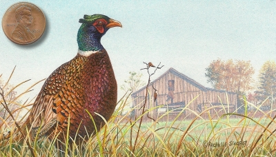 ringneck pheasant painting miniature