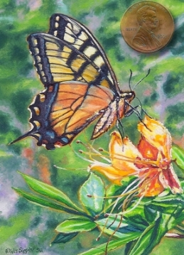 tiger swallowtail painting miniature