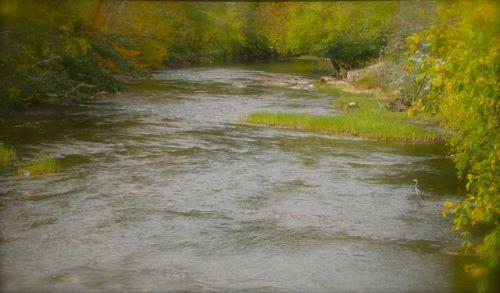photo of fall foilage