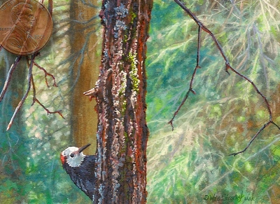 miniature painting of a whiteheaded woodpecker