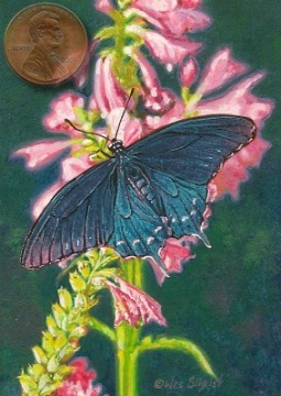 Butterfly painting miniature