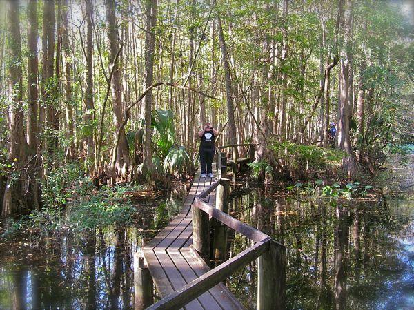 cypress catwalk trail