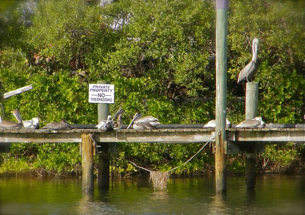 photo of pelicans on a dock