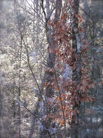 photo of frost in the smokies