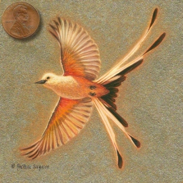 painting of a scissortail flycatcher