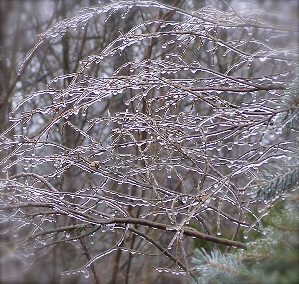 ice covered trees in the smokies