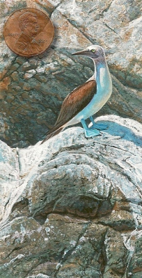 blue-footed booby painting