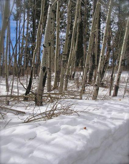 photo on Mt. Lemmon