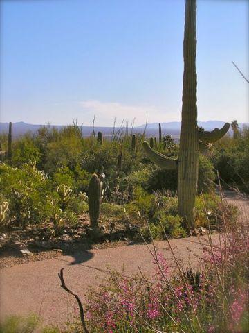 photo atthe arizona-sonora desert museum