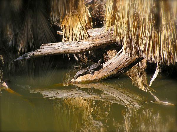 Agua caliente photo