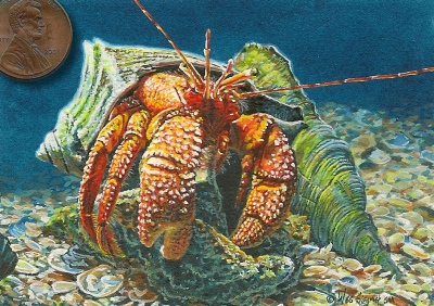 hermit  crab painting